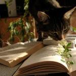 kot i książki w porannym świetle