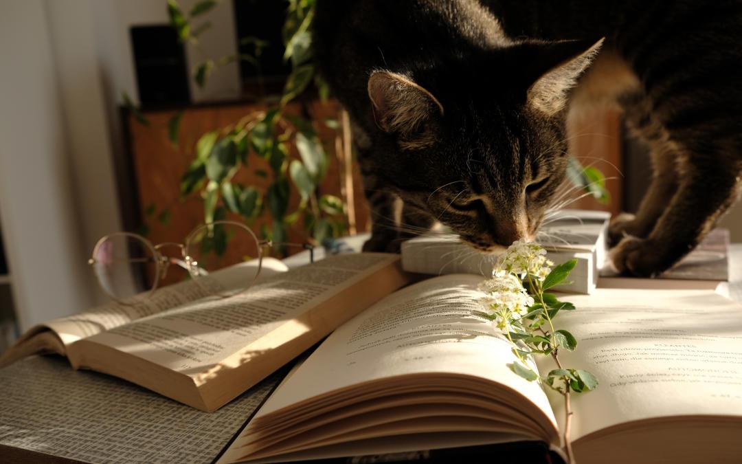 Doradzamy, jak wybrać światło do czytania książek